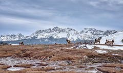 Under the Sawtooth (Musgrove and the Pumi) Tags: elk canadiangeese hotsprings geothermal snow sawtoothmountains stanley idaho