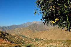 On the road to the Tizi N Test (Valentina Nappini) Tags: montagna mimosa albero verde azzurro giallo marocco africa atlante nikon d3200
