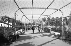 190104_Parc_Central_017 (Stefano Sbaccanti) Tags: bw blackandwhite bn parccentral valencia minox35gl kentmere400 bellinihydrofen analogicait analogue analogico argentique spain spagna selfdeveloped 2019 city