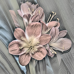 Tekening Clivia (Jan 1147) Tags: clivia tekening drawing photoshop topaz bewerking processing belgium bloem bmoemen flower flowers