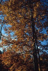 Eagle Creek Park, Indianapolis, Indiana (Roger Gerbig) Tags: fullframe 135film 35mm transparency slidefilm pkl kodachrome200 ef28105mmf3545 canoneos3 rogergerbig autumn fallcolors indiana indianapolis eaglecreekpark