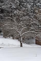 quabbinreservoir2019-80 (gtxjimmy) Tags: nikond7500 nikon d7500 winter snow quabbinreservoir swiftriver ware belchertown massachusetts watersupply newengland quabbin