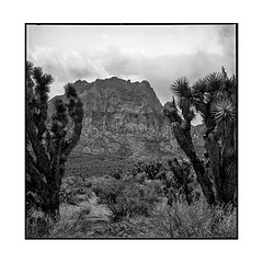 red 2 • red rock, nv • 2018 (lem's) Tags: cactus mountain montagne sky ciel desert nv nevada red rock canyon rolleiflex t