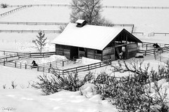 DSC_02526 Horsing Around in the Snow (DB-Designs) Tags: winthropwa horse snow barn bw