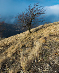 Tree alone in field (BenedekM) Tags: pilis hungary hungarian field view panorama nikon nikond3200 d3200 sigma sigma1750f28 trees woods mountains clouds cloudy fog foggy hills rocky