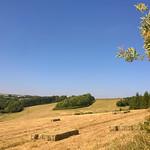 Summer's Hay thumbnail