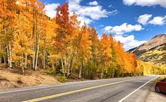 Autumn Already (simonmgc) Tags: 4 autumn color colorado fall trees