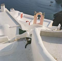 Santorini (samorodovs) Tags: 6x6 греция hasselblad санторини cm 500 8028 planar portra 160nc film cats santorini greece
