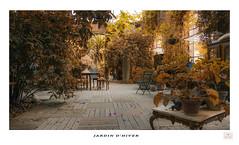Jardin d'hiver (Fred&rique) Tags: lumixfz1000 photoshop jardin botanique metz moselle lorraine serre plantes mobilier
