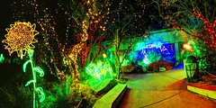 lighted walkway (JoelDeluxe) Tags: rol riveroflights abq biopark nm december 2018 albuquerque biological park pnm light display colors lights sculptures fantasy newmexico hdr joeldeluxe