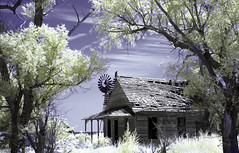 Picked Clean (explore) (unknown quantity) Tags: abandonedhouse buzzard sky windmill openwindows unpaintedwood trees shadows clouds underbrush brokenroof weathered hss
