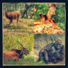 2016-03-29_22-33-03_XXX_-EFFECTS (Miguel Discart (Photos Vrac)) Tags: 2016 layoutfrominstagram miami miamizoo travel unitedstate us vacances zoo