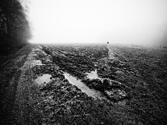 Terre d'hiver. (steph20_2) Tags: panasonic gh4 lumix m43 714 campagne countryside picardie oise hiver winter brouillard champ terre terroir monochrome monochrom chemin noir noiretblanc white skanchelli n