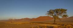 _RJS4407 (rjsnyc2) Tags: 2019 africa d850 desert dunes landscape namibia nikon outdoors photography remoteyear richardsilver richardsilverphoto safari sand sanddune travel travelphotographer animal camping nature tent trees wildlife