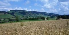 DSC05626 (ursrüegsegger) Tags: linden juli august getreideernte bauernhöfe landschaft regenbogen