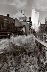 HighLine Sunny Sunday Feb 3. (sjnnyny) Tags: chelsea hudsonyards thehighline d7200 mono bw nyc manhattan promenade urbanlandscape nycloftbuildings officetowers stevenj sjnnyny touristattractions walkway afs1635f4gedvr nycparks