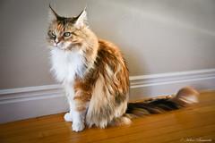 IMG_2986-1 (Helene Bassaraba) Tags: bestofcats coth5