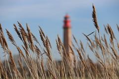 Fehmarn Impressionen (Elbmaedchen) Tags: fehmarn ostsee balticsea norddeutschland schleswigholstein insel leuchtturm lighthouse