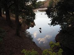 Deer (galeriejapon) Tags: nara japan deer pond silhouette shadow tree streetsnap ukimido