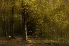 Amsterdamse bos (Marijke M2011) Tags: amsterdamsebos animal amsterdam atmosphere wood trees tranquility atmospheric nature netherlands noordholland