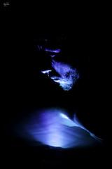 Blue light. (nagore552) Tags: light spain españa abstract retrato portrait blue dark water agua oscuridad face
