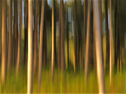 {Dreamy Woods}FCC126