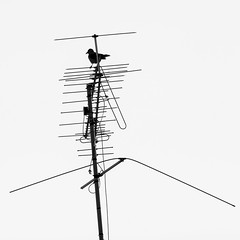 Birds' Parking Lot-3 (zeevveez) Tags: zeevveez zeevbarkan זאבברקן canon antenna bird bw
