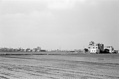 Field (Janeprogram) Tags: пленка 35mm blackandwhite bnwphotography filmphotography neopanacros100 acros100 fujiacros100
