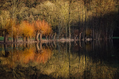 Is it End of Winter or Autumn? :) (freyavev) Tags: enz water reflections trees badenwürttemberg unterriexingen sunset deutschland germany outdoor nature mikasniftyfifty canon canon700d