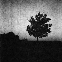 Lonely tree (Rosenthal Photography) Tags: washiw25 rolleiflex35f winter tetenaleukobrom1120°c3min 6x6 schwarzweiss ilfordrapidfixer asa25 bäume 20181205 pflanzen epsonv800 mittelformat städte ff120 anderlingen analog landschaft dörfer siedlungen lonelytree tree dark darkness daysofdarkness landscape mood december contrast blackandwhite rollei rolleiflex sk schneiderkreuznach xenotar 75mm f35 35f washi filmwashi washiw tetenal eukobrom 11 epson v800