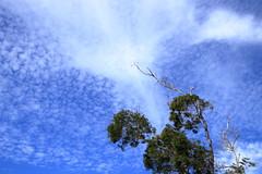 苗栗九華山大興善寺 (沐均青) Tags: landscape scenery travel colorful blue gold green white outside town countryside tamron clouds sky buildings temple religion