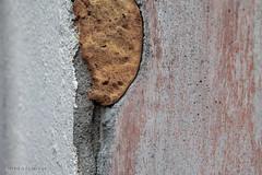 Purschuim (Pieter Musterd) Tags: pietermusterd musterd canon pmusterdziggonl nederland holland nl canon5dmarkii canon5d denhaag 'sgravenhage thehague lahaye purschuim isolatie muur wall