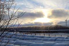 (jessalynn_sammons) Tags: canoncanada canonrebel canadianfarm farm cattle icestorm ice sunset