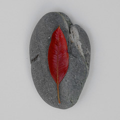Nature Portrait 015 (andy_AHG) Tags: nature foundobjects natural stone rock pebble shore leaf tree plant