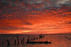 七股潟湖的夕色(Sunset @ Cigu lagoon)。 (Charlie 李) Tags: taiwan oysterfield cigulagoon sunset 台南市 火燒雲 夕雲 夕陽 蚵田 蚵架 七股 潟湖