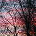 Winter Sunset - Coucher de soleil d'hiver