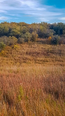 Hidden Coyote (Bracus Triticum) Tags: hidden coyote アルバータ州 alberta canada カナダ calgary カルガリー 9月 九月 長月 くがつ kugatsu nagatsuki longmonth 2018 平成30年 fall autumn september