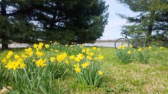 2019 Bike 180: Day 36 - Spring! (mcfeelion) Tags: cycling bike bicycle bike180 2019bike180 ladybirdjohnsonpark washingtondc spring