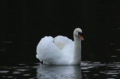 IMG_5075 (monika.carrie) Tags: monikacarrie wildlife scotland fyvie