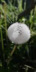 Bola helada - Mungia - (eitb.eus) Tags: eitbcom 41547 g1 tiemponaturaleza tiempon2019 bizkaia mungia angieschulte
