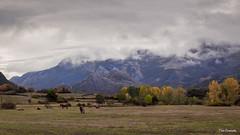 tierras leonesas (Toño Escandón) Tags: naturaleza nubes montaña caballos verde vegetacion león toño escandon canon tamron arboles