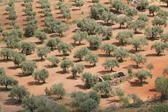 Benquerencia de la Serena, dehesa ([ ͆ ◎] Bernard LIÉGEOIS) Tags: espagne españa spain estrémadure extremadura laserena benquerenciadelaserena paysage landscape dehesa chênesverts