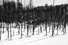 blue pond (gro57074@bigpond.net.au) Tags: mono monochrome monotone bw 2019 february f130 2470mmf28 tamron d850 nikon snow frozen winter nature guyclift shirogane bluepond japan hokkaido biei