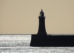 North Light Silhouette - Tynemouth (Gilli8888) Tags: nikon p900 coolpix tyneandwear coast coastal northpier northlight lighthouse tynemouth silhouette silhouettephotography pier sunrise