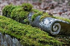 Jüdischer Friedhof Darmstadt (nordelch61) Tags: darmstadt hessen friedhof jüdisch juden grab gräber grabstätte alt verwittert moos
