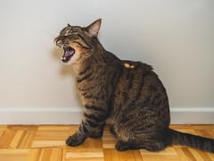 DSC04063-3 (iocatco) Tags: cat kitten cats sony a7