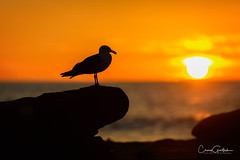 La Jolla Sunset (craig goettsch) Tags: