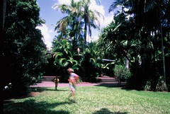 Being Chased by Little Brother (Warm Seas) Tags: pentaxmesuper fujivelvia50 velvia50 35mm australia australiazoo zoo december summer motion blur motionblur palm tree tropical running run chase brothers
