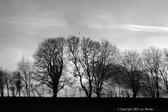 8000 (Spotmatix) Tags: 50mm 50mmf17 a37 belgium brabantwallon camera countryside effects landscape lens minolta monochrome places primes seasons sony villerslaville winter
