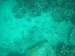 Cuttlefish - Anse Chastanet, St Lucia (h_savill) Tags: 2019 february feb holiday travel vacation tourist trip explore worldwide st lucia caribbean antilles windward isle soufriere piton view landscape beach sea water marine anse chastanet ansechastanet sand ocean snorkel underwater life fish boat stlucia